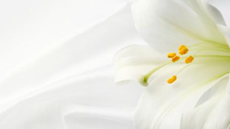 Chicago tribune death notices death notices death notice white flower mightylinksfo
