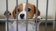 Pets: Dog in cage